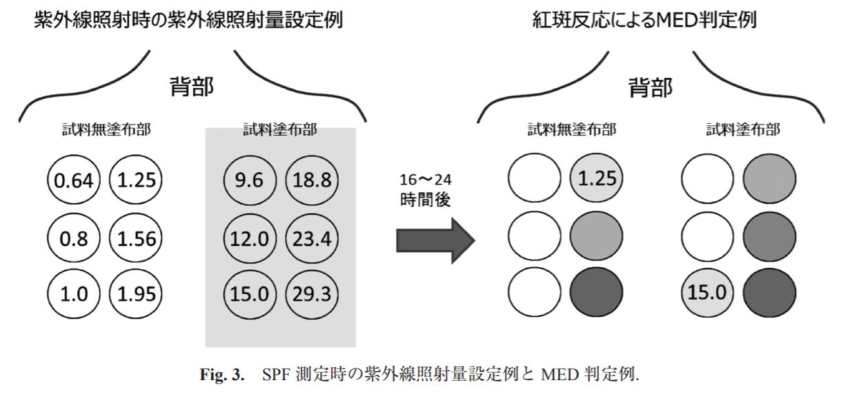SPF測定法